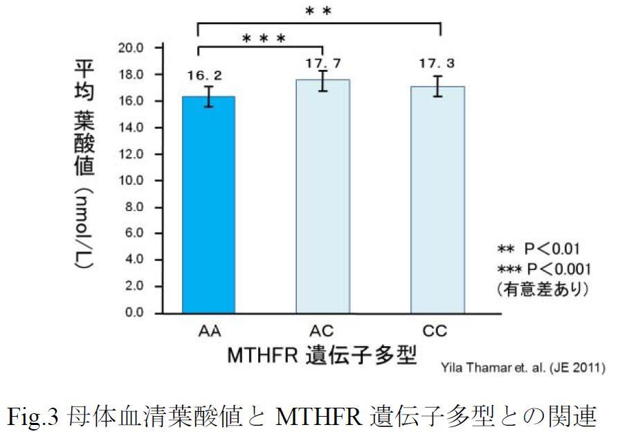 図3母体血清葉酸値とMTHFR遺伝子多型との関連